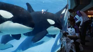 Map Contrasting SeaWorld Orca Pool With Leisure Activity Lake Goes Viral