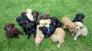 Dog Shocks Owners By Giving Birth To One Of Largest Ever Litters