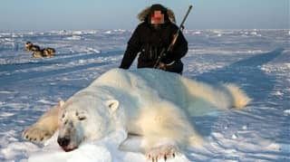 Polar Bears Will Become Extinct If Trophy Hunting Doesn't End, Conservationist Warns