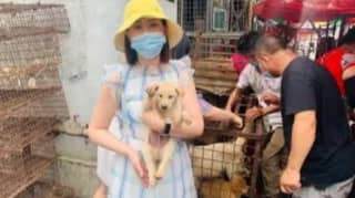 Chinese Markets Sell Dog Meat Ahead Of Festival Despite New Guidelines Classifying Dogs As Pets