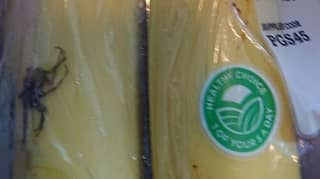 Tesco Shopper Terrified After Packet Of Bananas Contains 'Deadly Spider'