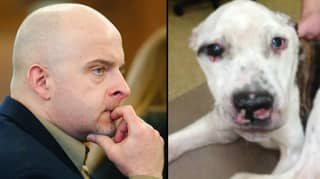 Man Who Tortured Dog So Severely It Had To Be Put To Sleep Is Sent To Jail