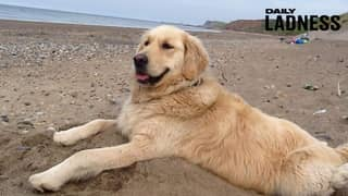 Kind-Hearted Cabby Drives Dog To The Beach After She Becomes Unable To Walk There