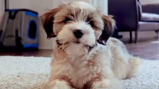 Government Release Heartbreaking Ad Warning People About Buying From Puppy Farms For Christmas