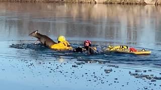 Firefighters Rescue Drowning Deer From Frozen Lake In Kansas