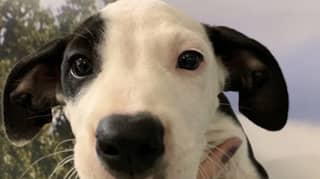 RSPCA Launches $29 Adoption Sale On Hundreds Of Animals