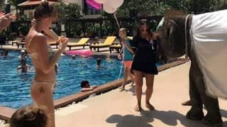 Baby Elephant Forced To Entertain Guests At Five-Star Thailand Resort