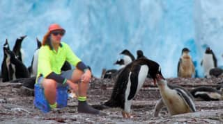 Australian Tradies Wanted For Chippy, Sparky And Plumber Jobs On Antarctica