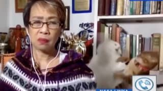Huge Cat Fight Erupts Behind Woman During Live TV Interview