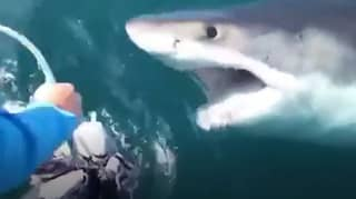 Fishermen Spot Huge Great White Off The Coast Of Maryland