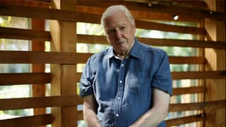 Sir David Attenborough 'Sees No Reason' Why He Can't Live Past 100 Years Old