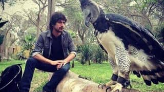 ​The Harpy Eagle Is So Terrifyingly Huge That Some People Think It's A Person In Costume