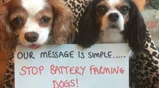 New Legislation Called Lucy's Law Will Crack Down On Puppy Farms