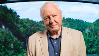 Sir David Attenborough Says Humans Have 'Overrun The World'