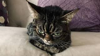 Cat With A Permanent Scowl Has Become An Internet Sensation