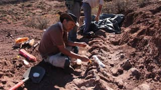Remains Unearthed In Argentina Could Be From Largest Dinosaur That Ever Lived