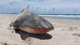 Half A Shark Washes Up On Australian Beach