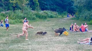 Outcry After Authorities Suggest Wild Boar Chased By Nude Sunbather Could Be Killed