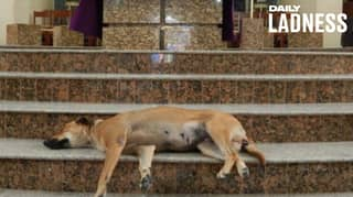 Brazilian Priest Brings Dogs Into Church To Get People To Adopt Them