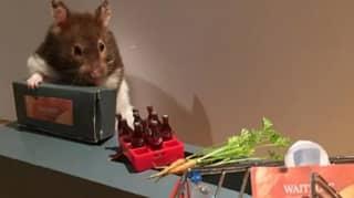 Woman Recreates Lockdown Scenes In Miniature With Her Hamsters