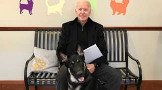 Joe Biden's German Shepherd To Be First Rescue Dog Living In The White House