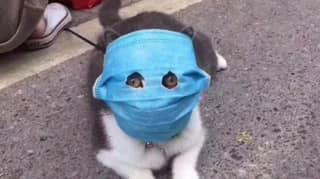 Cat Given Human Face Mask With Eye Holes To Protect From Coronavirus