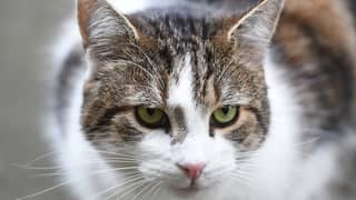 Australian Study Finds Pet Cats Are Highly Efficient Killing Machines