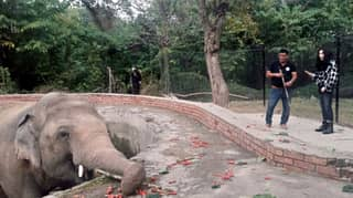 Cher Finally Meets 'World's Loneliest Elephant' After Helping Free Him From Zoo
