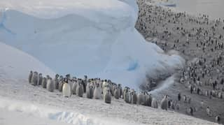 Scientists Discover New Emperor Penguin Colonies In Antarctica Through Satellite Imaging