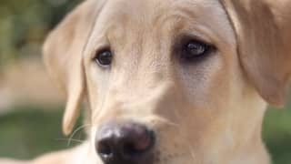 Family Spend Nearly $50,000 On Cloning Their Pet Dog After It Dies