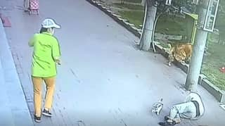 Dog Corners Cat After It Plummets On To Pensioner's Head