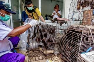 Wuhan Bans Eating Wild Animals After Coronavirus Pandemic Link