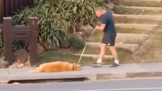 Millions Of People Relate To Aussie Golden Retriever That Has Simply Had Enough