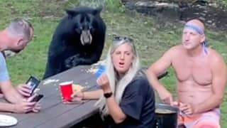 Family Having A Nice Quiet Picnic Are Joined By Wild Bear