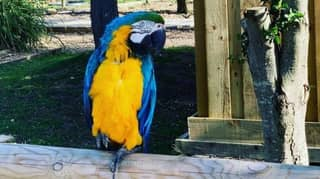 Wildlife Park Removes Parrots From Display After They Start Swearing At Visitors