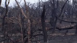 Kangaroo Island Bushfire Is Finally Contained After Three Long Weeks