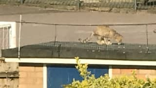 'Large Wildcat With Big Claws' Has Been Spotted In UK Garden