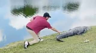 Golfer Creeps Up Behind Alligator To Retrieve Ball