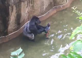 New Footage Shows Gorilla 'Protecting' Little Boy And The Pair 'Holding Hands'