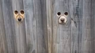 Genius Pet Owner Makes Dog-Sized Holes In Fence