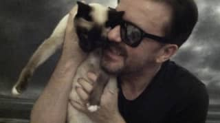 Ricky Gervais' Beloved Cat Ollie Has Died After Sudden Health Deterioration
