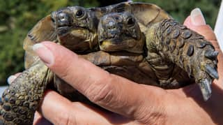 New Photos Of Two-Headed Tortoise Released Ahead Of 23rd Birthday Next Month