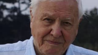 Sir David Attenborough Has Officially Joined Instagram