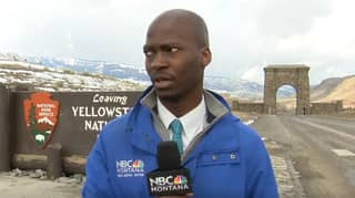 Reporter Abandons Broadcast After Spotting Bison Heading Towards Him