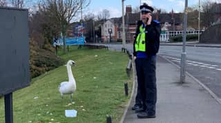 Police Officer Photographed In Real Life Hot Fuzz Moment With Swan