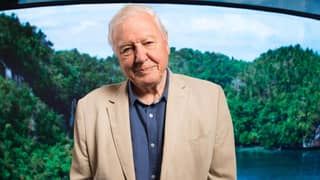 David Attenborough: A Life On Our Planet Drops On Netflix Today