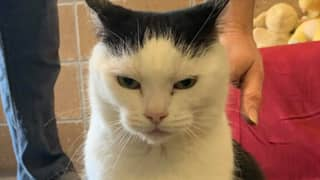 'World's Worst Cat' Is Up For Adoption If You Want A Devilish Feline In Your Home