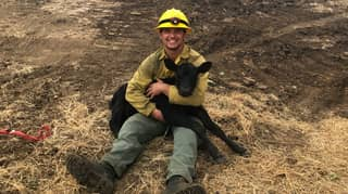 Firefighters Rescue Calf While Battling Massive Wildfire In America