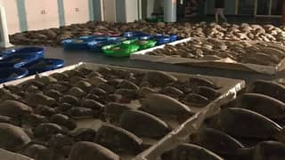 Volunteers Are Rushing To Save As Many Turtles As Possible Amid Texas Winter Cold Snap