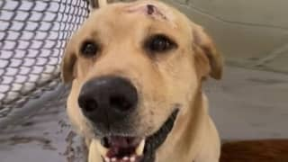 Florida Woman Arrested After Shooting Dog In Head With Crossbow